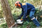 Avon Plains Tree felling services 21