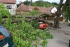 Avon Plains Tree felling services 41
