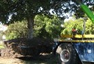 Avon Plains Tree felling services 4